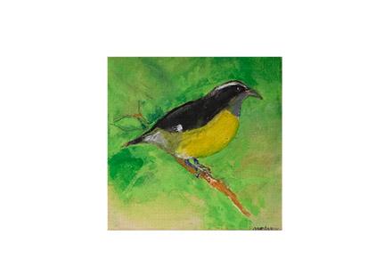 Bird Bobo